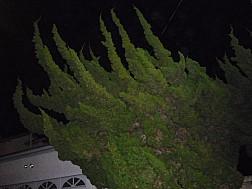 Passage76_1070474.jpg: 700x525, 102k (December 15, 2010, at 12:42 AM)
